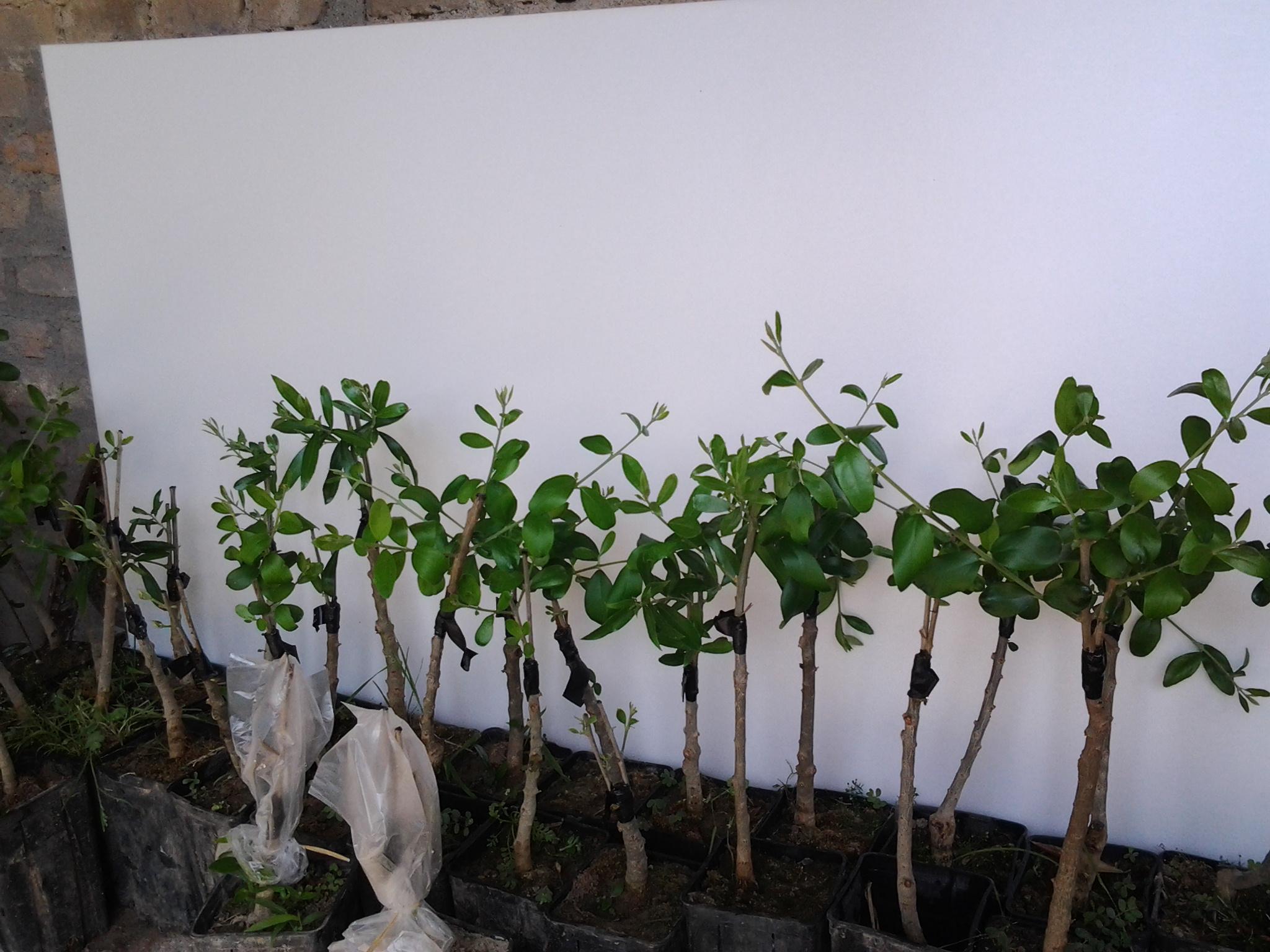 piante 2