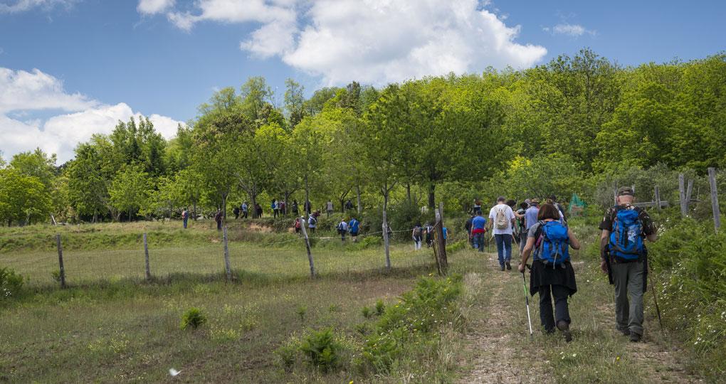 TREKKING Domenica escursione ai Piani d'Aspromonte - Lente ...